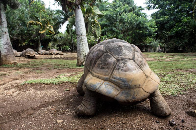 skildpadde-2